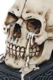 Tears of Time - Skull Tealight Holder