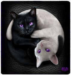 Yin Yang Cats - fleecehuopa