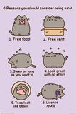 Reasons To Be a Cat